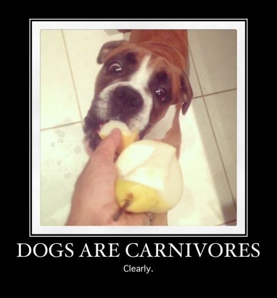 Augie Carnivore