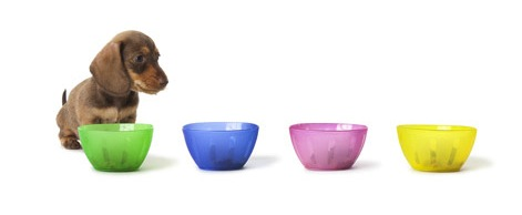 dog-food-bowls-shutterstock_78817165