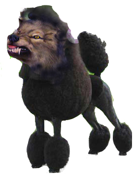 wolf-poodle