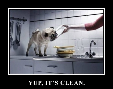 Try white vinegar instead of a pug.